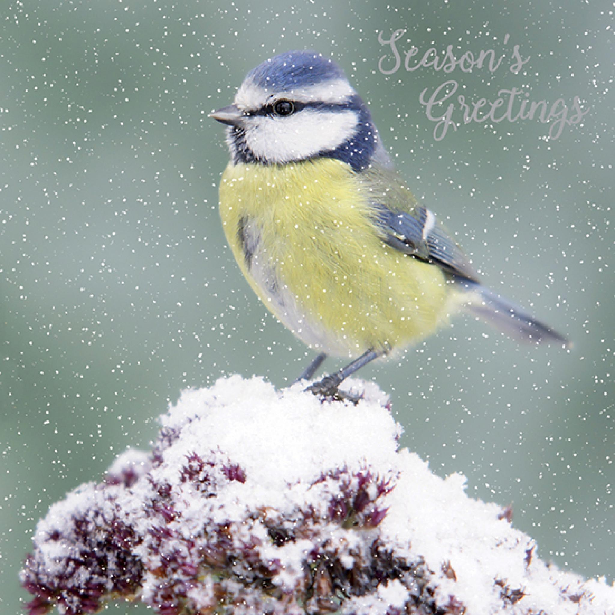 Winter/'s Walk 10 Cards of 1 Design RSPB Small Square Christmas Cards