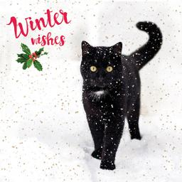 Charity Christmas Card Pack - It's Snowing!