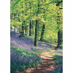 Notecard Pack - Bluebell Wood