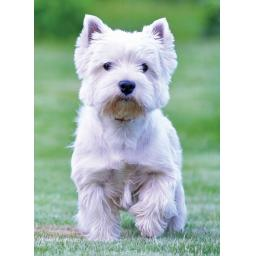 Animal Blank Card - West Highland White Terrier