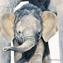 Pollyanna Pickering Collection - Elephant