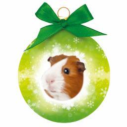 Baubles - Guinea Pig