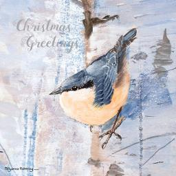 RSPB Small Square Christmas Card Pack - Christmas Greetings