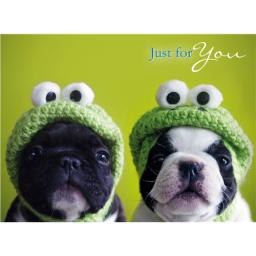 Animal Birthday Card - Kermit's Pugs