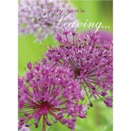 Sorry Card - Alliums (Leaving Card)