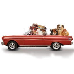 Pet Pawtrait Card - Road Trip!