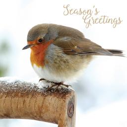 Charity Christmas Card Pack - Resting Robin