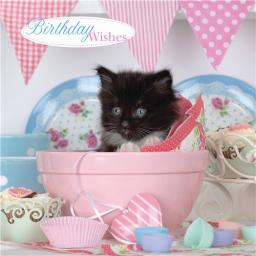 Animal Birthday Card - Kitten In Bowl