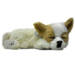 Precious Petzzz - Chihuahua