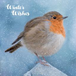 RSPB Small Square Christmas Card Pack - Snowy Scene