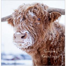 Charity Christmas Card Pack - Seasons Greetings