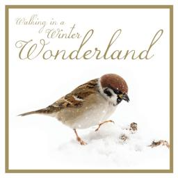 RSPB Small Square Christmas Card Pack - Winter's Walk