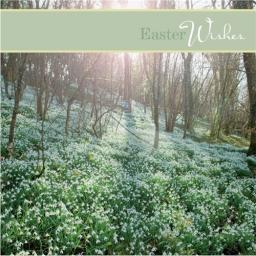 Easter Card Pack - Springtime Wood