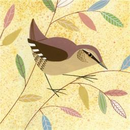 RSPB Card - Wren