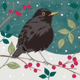 RSPB Small Square Christmas Card Pack - Blackbird & Berries