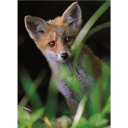 Animal Blank Card - Fox Cub