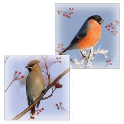 RSPB Luxury Christmas Card Pack - Waxwing & Bullfinch Winter Birds