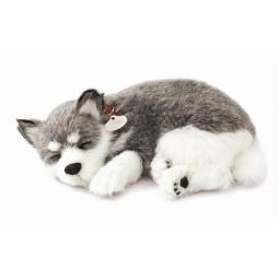 Precious Petzzz - Alaskan Husky