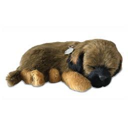Precious Petzzz - Border Terrier