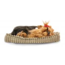 Precious Petzzz - Yorkshire Terrier