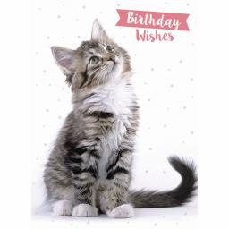 Animal Birthday Card - Tabby Cat 'Birthday Wishes'