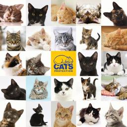 Square Jigsaw - Cats Protection