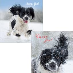 Luxury Christmas Card Pack - Snowy Springers