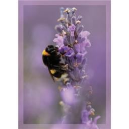 RSPB - Notecard Pack (Bumblebee)