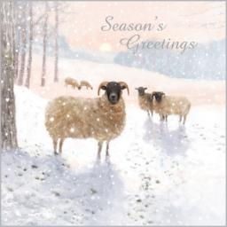 Charity Christmas Card Pack - Snowy Flock