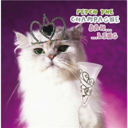 Pet Pawtrait Card - Champagne Kitty (Birthday Card)