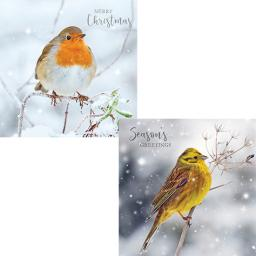 RSPB Luxury Christmas Card Pack - Frosty Perch