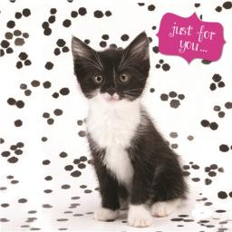 Pet Pawtrait Card - Kitty Just For You (Birthday Card)