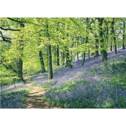 Beautiful Blanks Card - Bluebell Wood