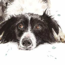 Puppy Dog Eyes Card Collection - Border Collie Pip