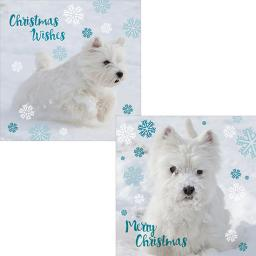 Luxury Christmas Card Pack - Winter Westies
