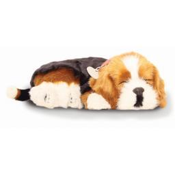 Precious Petzzz - Beagle