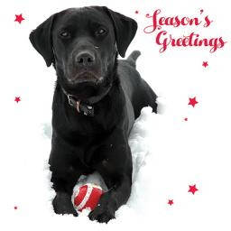 Charity Christmas Card Pack - Labrador Fun!