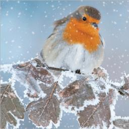 Charity Christmas Card Pack - Frosty Perch