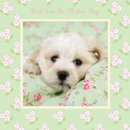 Mother's Day Card - Puppy