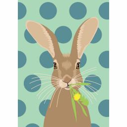 Notecard Pack - Hare On Spots