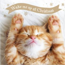 Charity Christmas Card Pack - Wake Me Up
