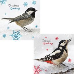 RSPB Luxury Christmas Card Pack - Christmas Tweeting