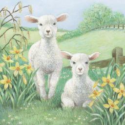 Easter Card Pack - Spring Lambs
