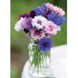 Beautiful Blanks Card - Colourful Cornflowers