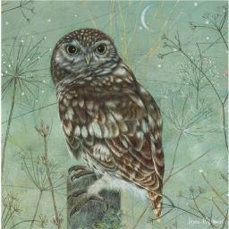 Enchanted Wildlife Card - Owl