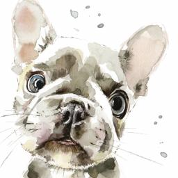 Puppy Dog Eyes Card Collection - French Bulldog Puppy Pierre