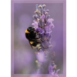 RSPB - Mini Notecard Pack (Bumblebee)