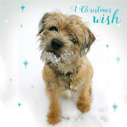 Charity Christmas Card Pack - A Christmas Wish