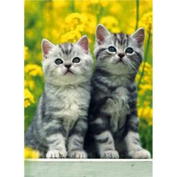 Animal Blank Card - Tabbies On Yellow