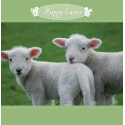 Easter Card Pack - Two Lambs